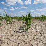 Phát triển Nông nghiệp Công nghệ cao & Giải pháp để ứng phó với biến đổi khí hậu