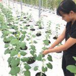 Trợ lực cho khởi nghiệp nông nghiệp