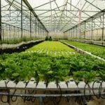 Nâng cao hiệu quả dạy nghề cho lao động nông nghiệp ứng dụng công nghệ cao trên địa bàn TP.HCM(phần 2)