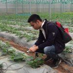 Trồng rau sạch bằng công nghệ ánh sáng