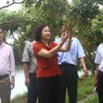 Hỗ trợ nông dân Thủ đô phát triển nông nghiệp công nghệ cao
