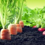 TPHCM công bố nhóm sản phẩm nông nghiệp chủ lực