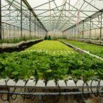 Một số nhóm giải pháp cho việc ứng dụng công nghệ cao trong sản xuất nông nghiệp