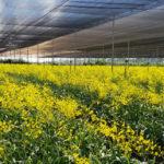 """Ứng dụng công nghệ cao để nông nghiệp """"cất cánh"""""""