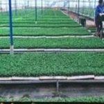 Sản xuất nông nghiệp hữu cơ thông minh: Nâng cao giá trị nông sản Việt