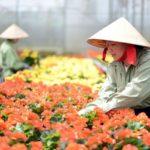 Lan tỏa phong trào phát triển nông nghiệp công nghệ cao