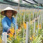 Hướng đến phát triển bền vững