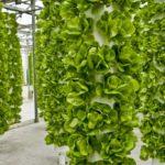 Chỉ 1200m2 làm mô hình khí canh vừa trồng được rau vừa nuôi được cá