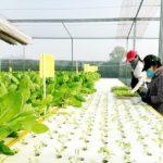 Tiếp sức các hợp tác xã nông nghiệp mới
