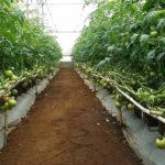 Hiệu quả phong trào sản xuất nông nghiệp công nghệ cao ở Đức Trọng