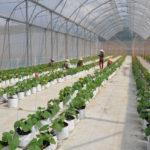 Gỡ vướng về đất để phát triển nông nghiệp công nghệ cao