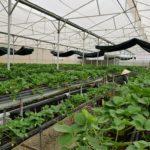 Lâm Đồng tạo đột phá nhờ nông nghiệp công nghệ cao