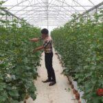 8X ứng dụng chuyển giao thành công kỹ thuật trồng dưa lưới thu nhập 600 triệu đồng năm